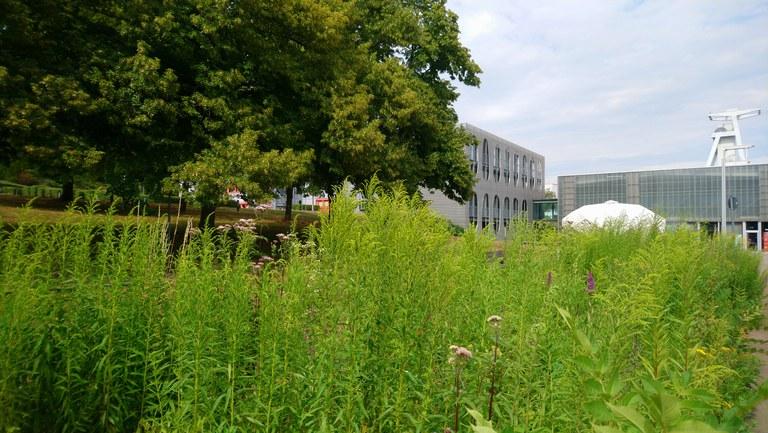 Göttelborn Campus.JPG